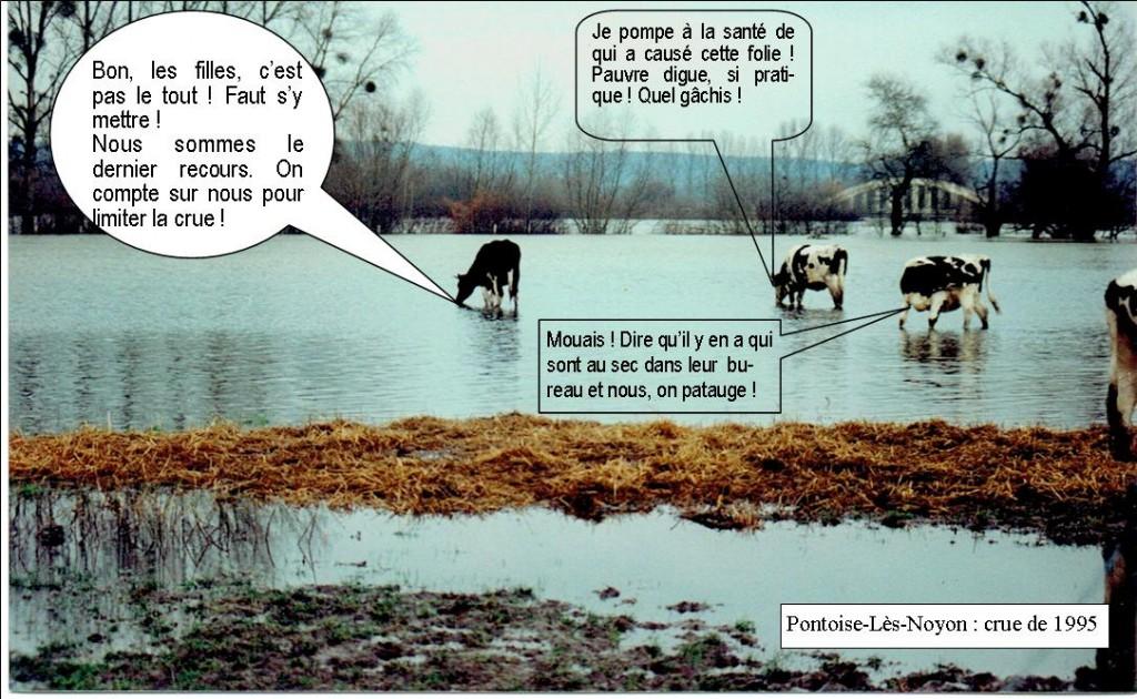 Les vaches de l'Oise pour lutter contre les inondations à Varesnes !!!
